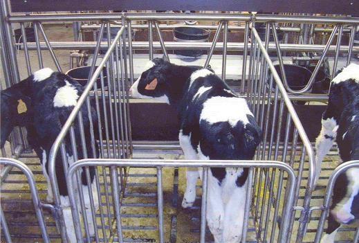 box-vitelli-carna-bianca-3.jpg
