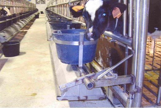 box-vitelli-carna-bianca-4.jpg