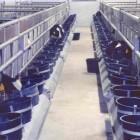 box-vitelli-carna-bianca-2.jpg