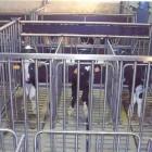 box-vitelli-carna-bianca-5.jpg