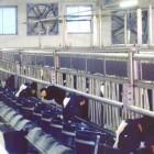 box-vitelli-carna-bianca-7.jpg